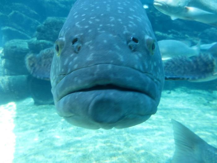 En av fiskarna pa uShaka Marine World