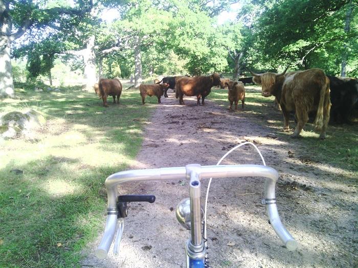 Typiskt problem man kan möta på under ett cykelpass i Blekinge.