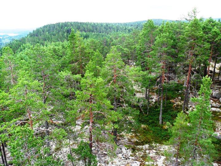 Här uppe var målet på tredje intervallen i Hertsjö. Sämre platser att pusta ut på kan man ju ha..